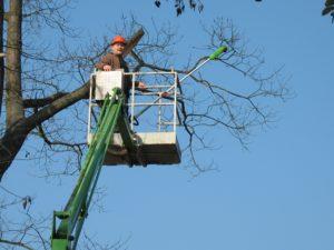 Bäume zurück schneiden